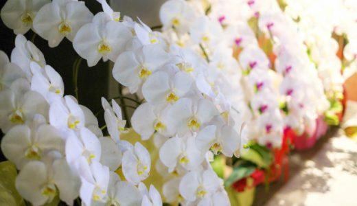 胡蝶蘭が開店・開業祝いのお花に選ばれる理由と喜ばれる贈り方