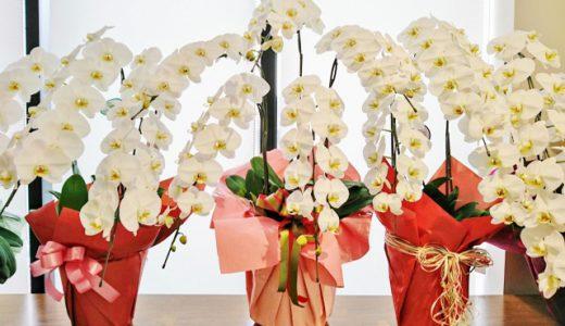 開店・開業祝いに喜ばれるお花の選び方と今され聞けないマナー